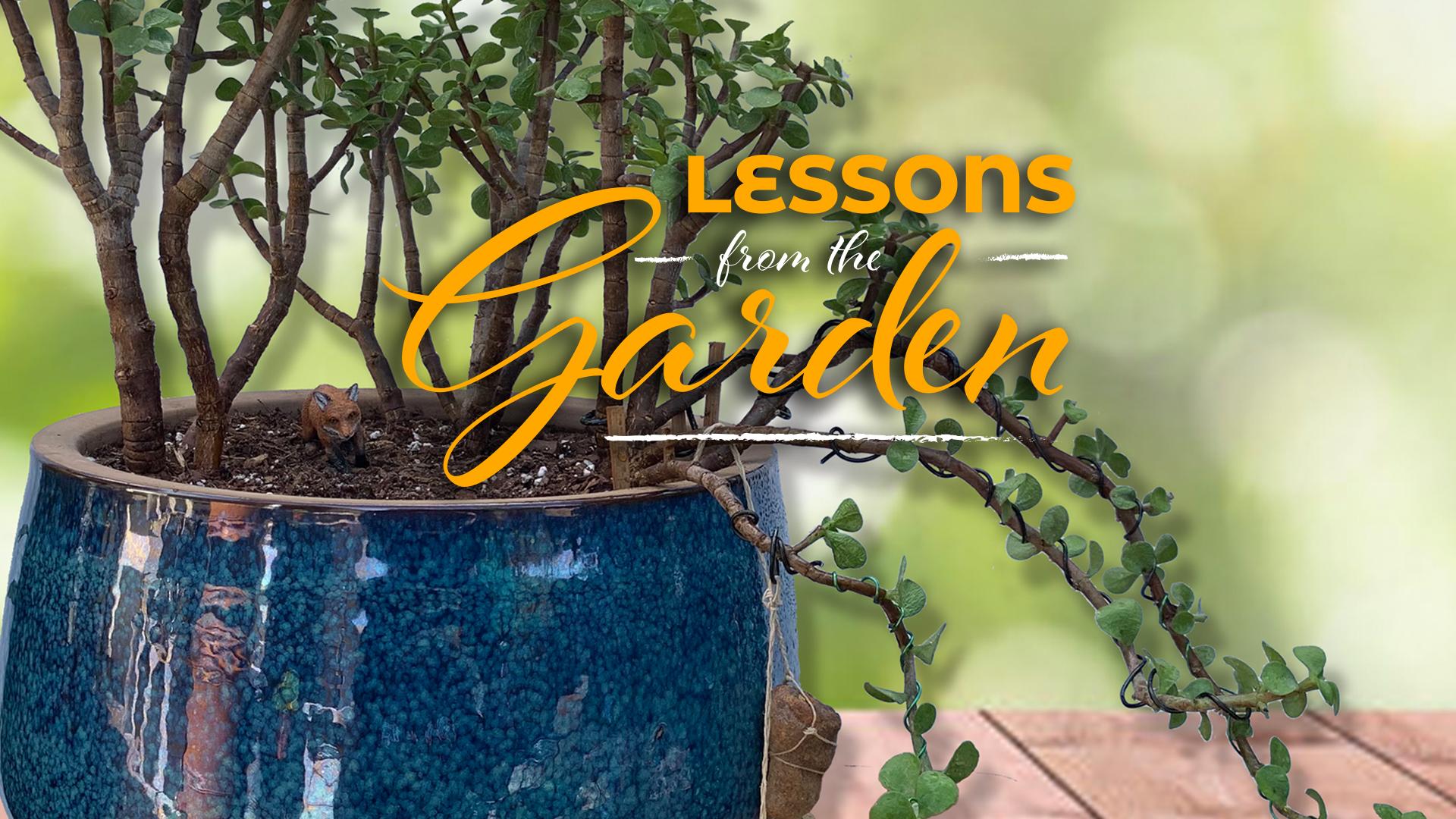 Intention in the Garden