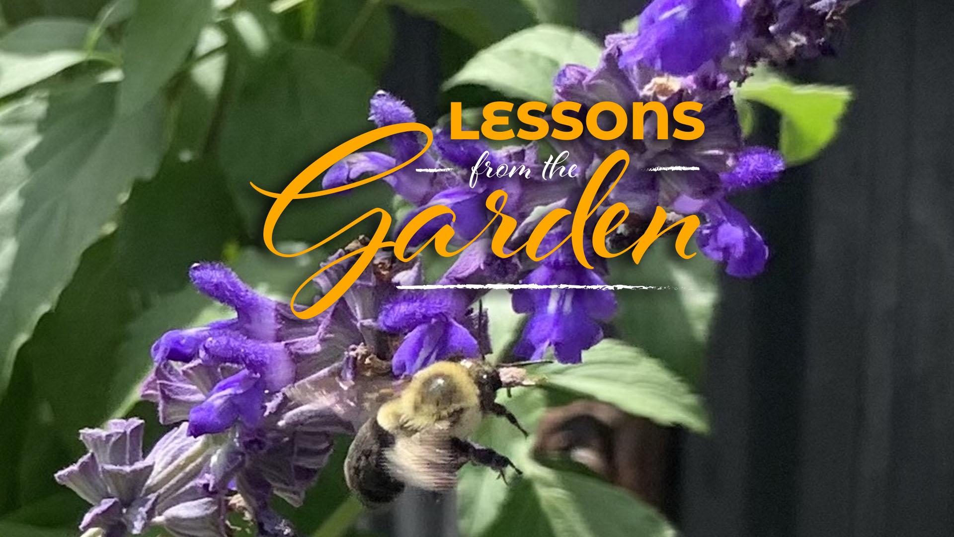 Indescribable Worship In The Garden