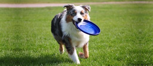 Dog Training Orange County