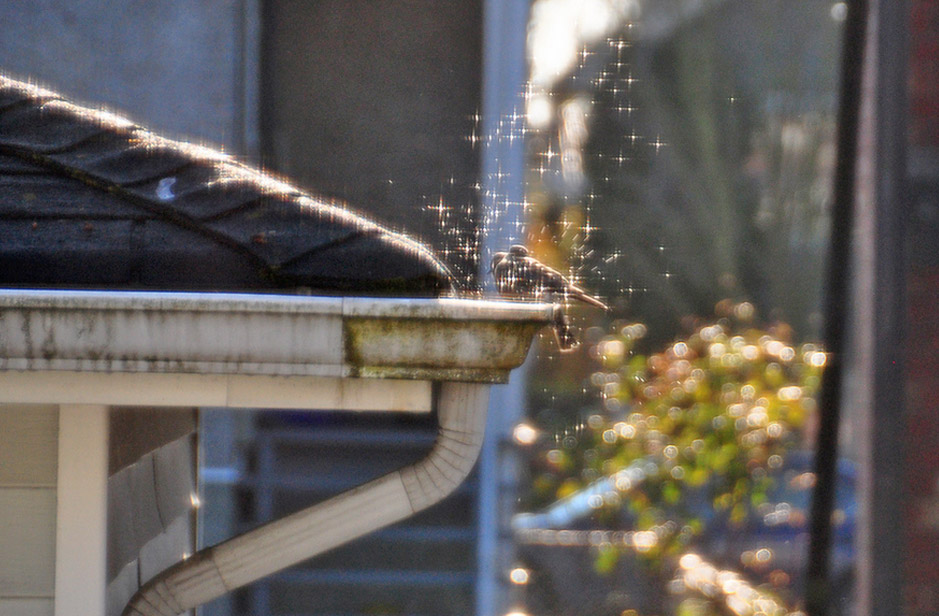 The Significance of Roof Gutters and Whether You Need Them