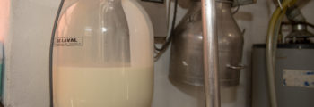 Transferring the Milk