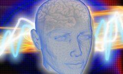 Human-brain-facts-stats