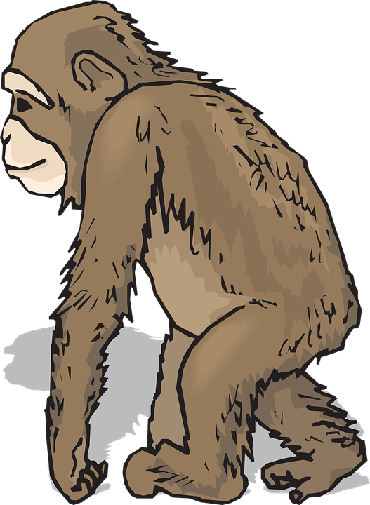 hominids-facts-stats
