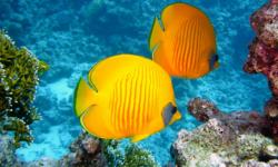 facts-stats-fish