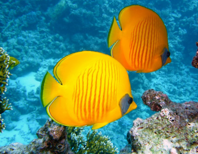 Facts and Statistics about Fish