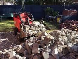 dingo picking rocks
