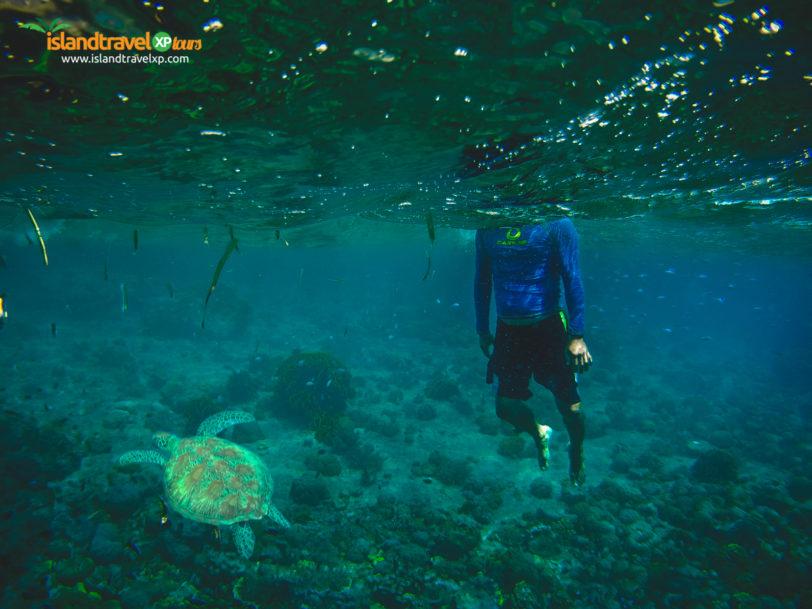 Turtle Swim in Moalboal