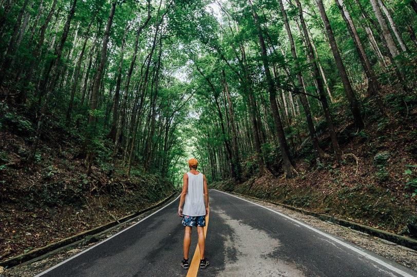 bohol-man-made-forest
