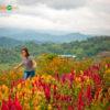 city-tours-sirao-flower-farm