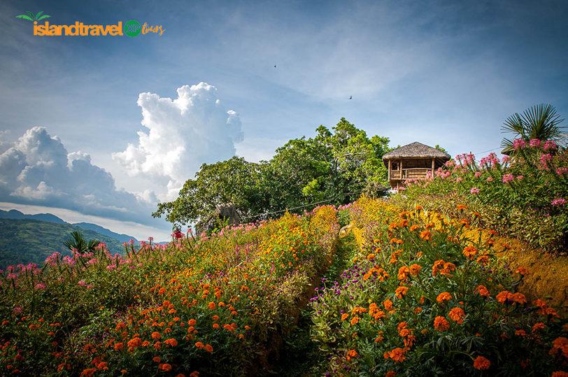 sirao-flower-farm