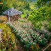 sirao-flower-farm2