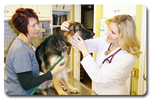 Medical Services at Companion Animal Clinic in Tecumseh MI