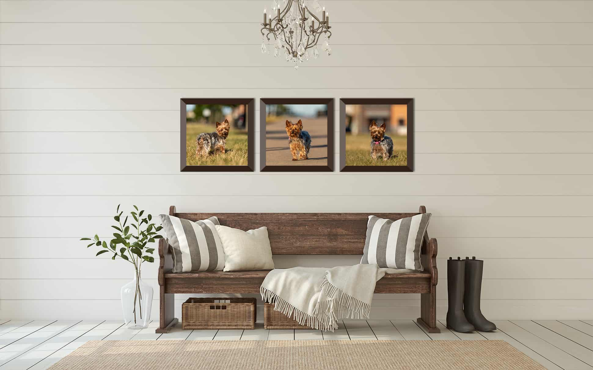 Three Framed Prints of a Dog in a Home Entryway