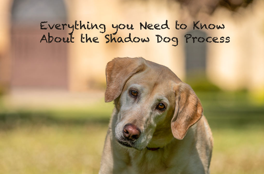 The Shadow Dog Experience