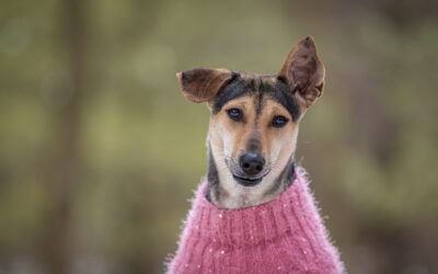 Rescued Dogs Project – Pari