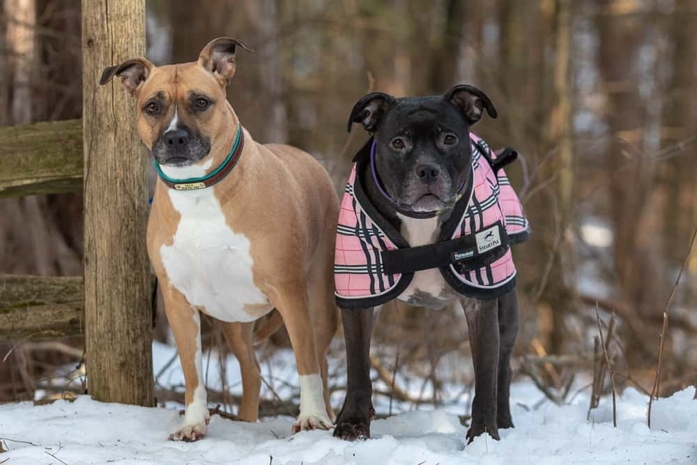 Rescued Dogs Project – Nyx & Finn