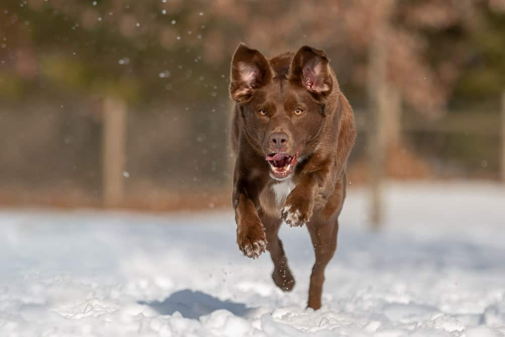 Rescued Labrador Mix Shadow Dog Photography
