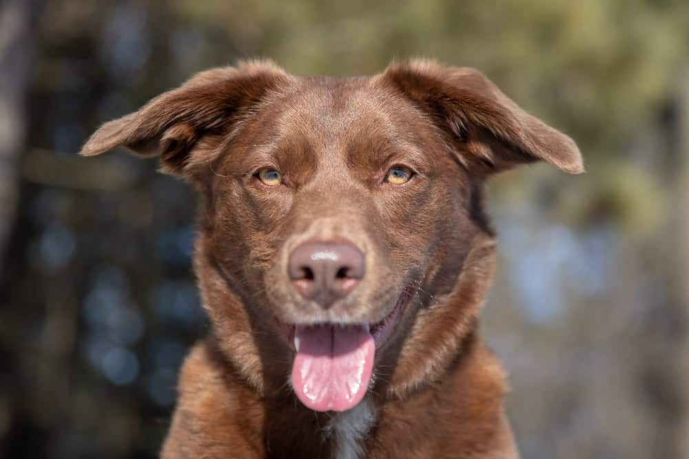 Rescued Dogs Project – Caramel