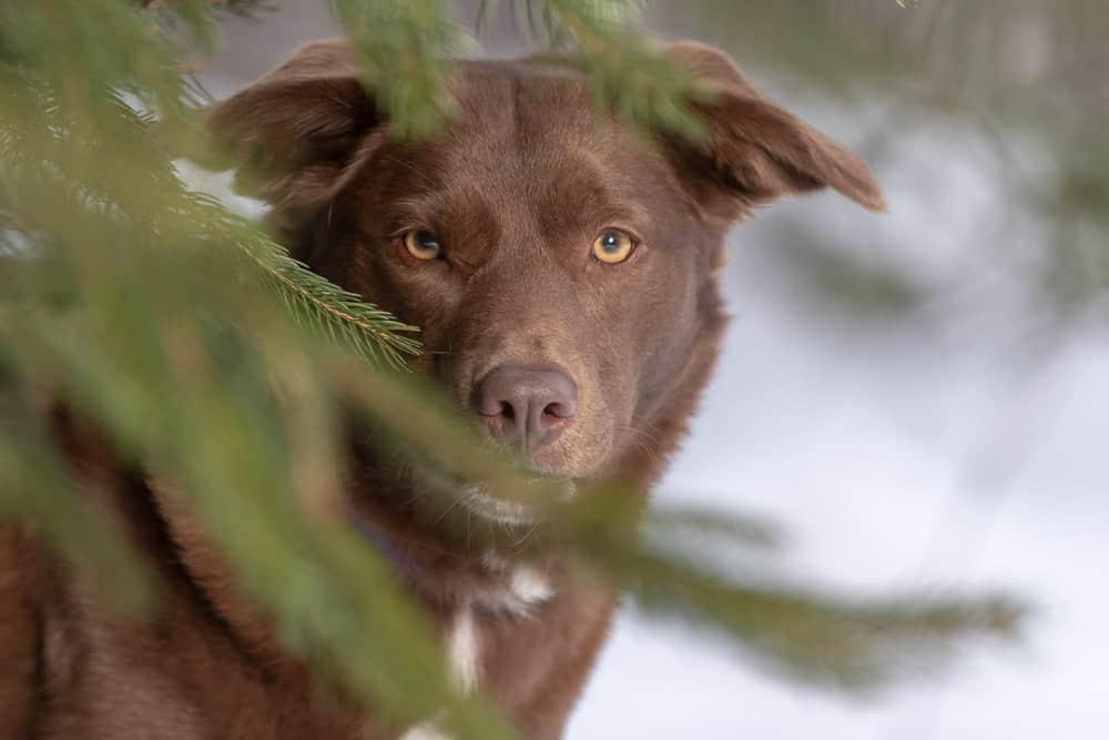 Labrador Mix Shadow Dog Photography