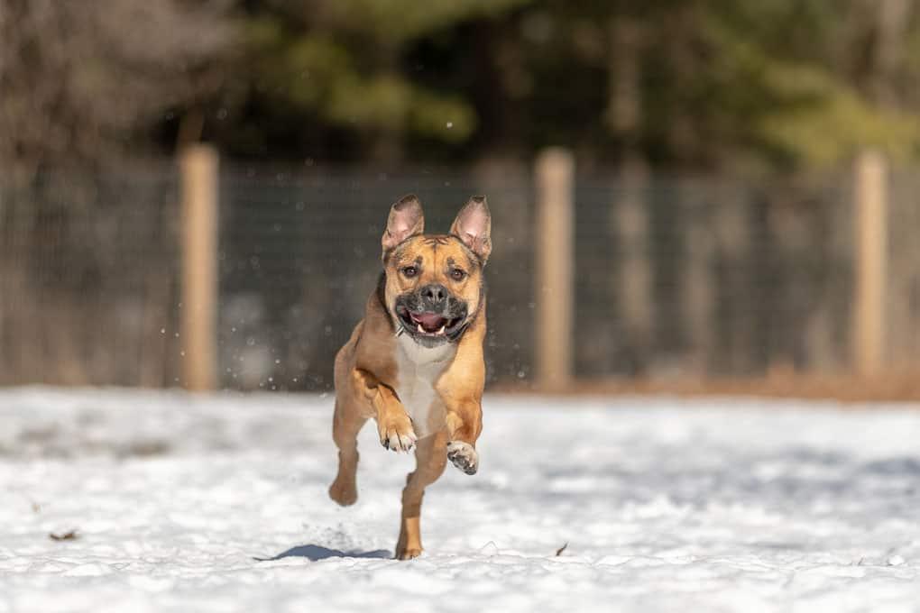 Running Dog Shadow Dog Photography