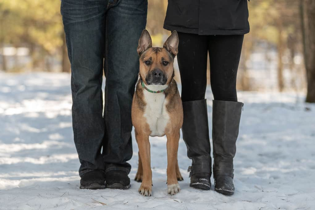 Rescued Dogs Shadow Dog Photography