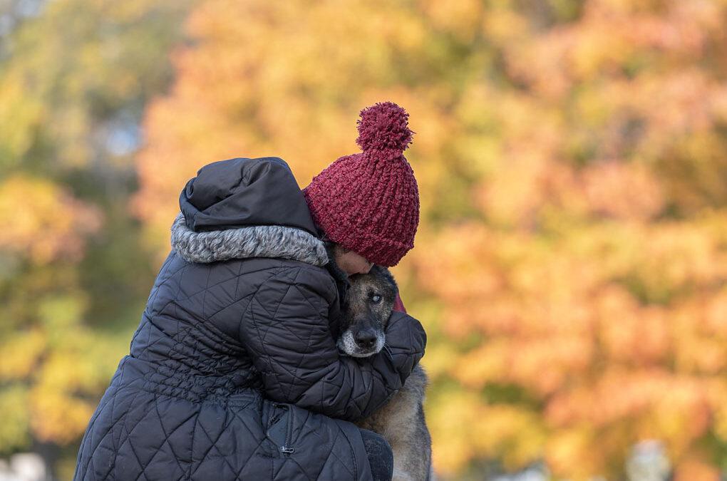 German Shepherd Dog Shadow Dog Photography