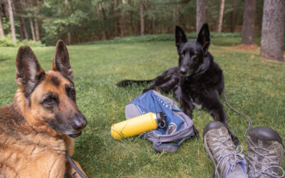 Hiking Safely with your Dog
