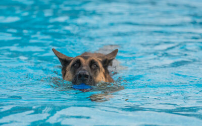 How to Keep Dogs Safe in Hot Weather