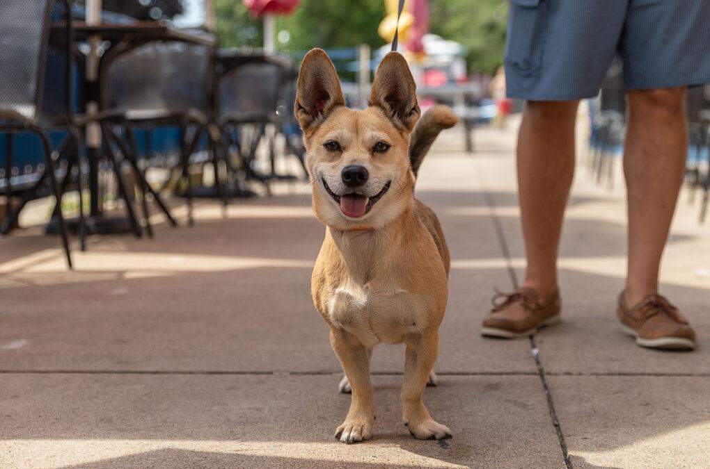 5 Dog Friendly Restaurants in Lake Geneva