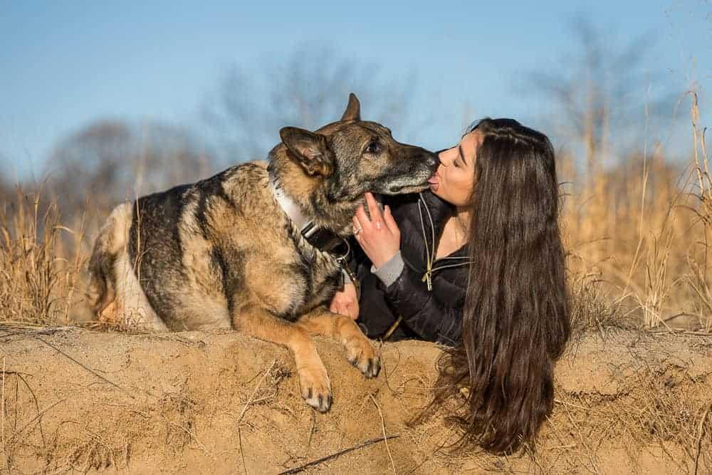 German Shepherd Service Dog Shadow Dog Photography