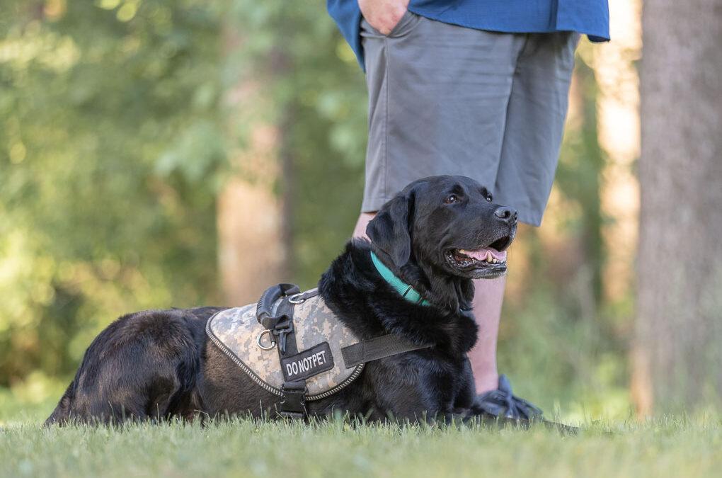 Service Dog Shadow Dog Photography