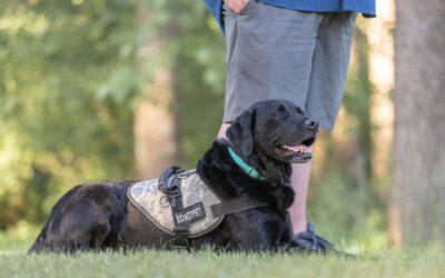 Service Dog Etiquette
