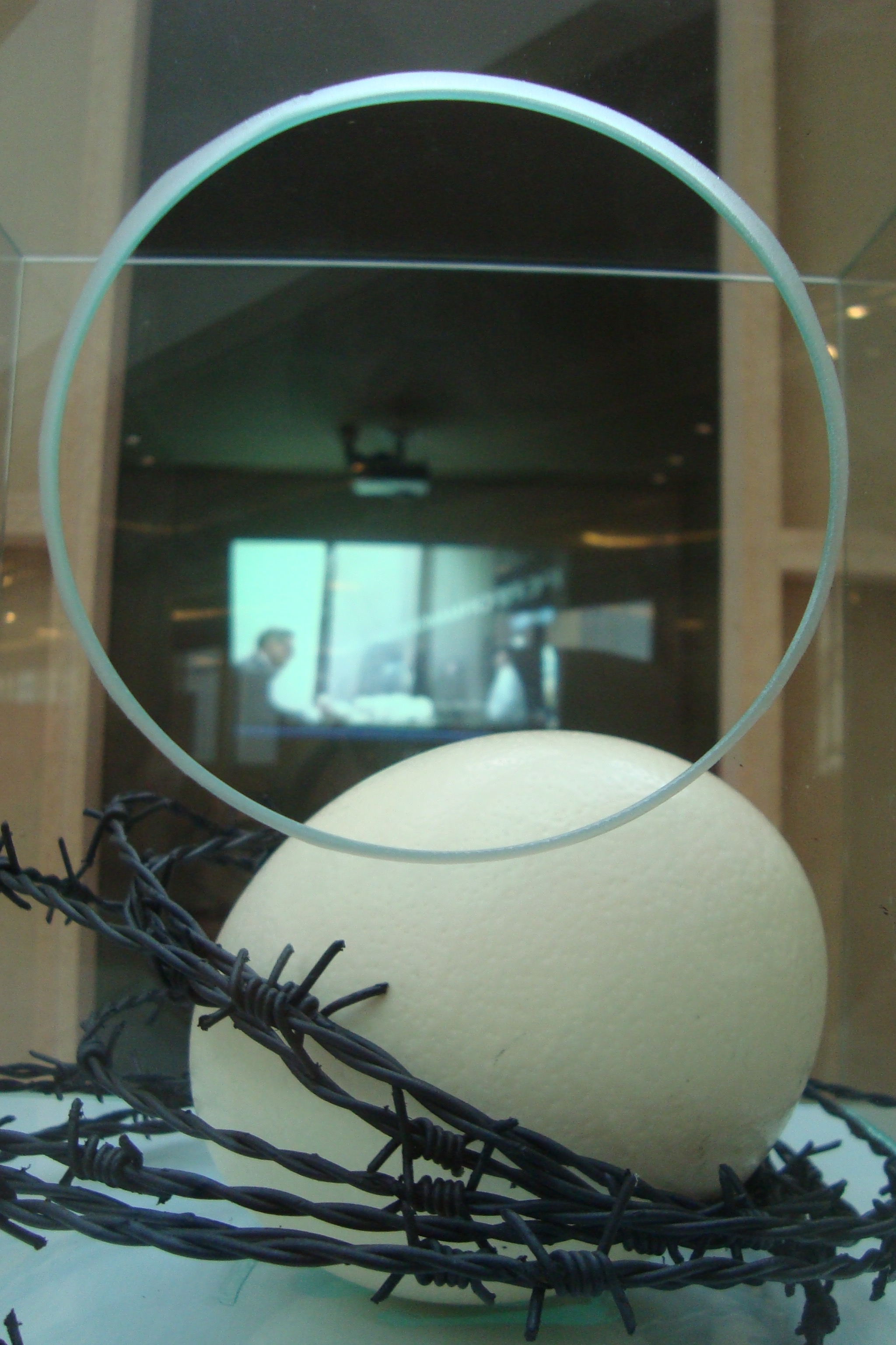 No.Body egg installation