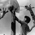 assumptios-basketball