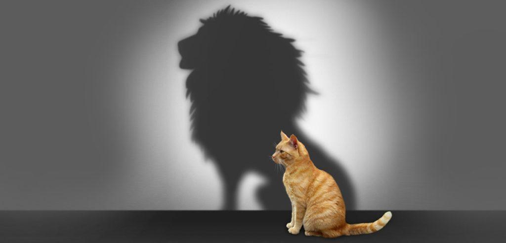 confidence-cat-lion-shadow