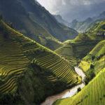 Vietnam-rice-fields