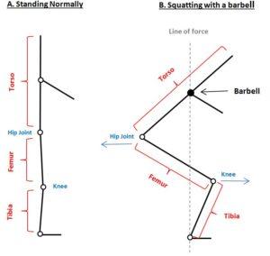 Squats Mechanics 1