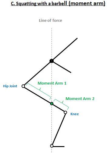 Squats Mechanics 2