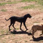 Município vai destinar recursos para o controle da população de animais de rua