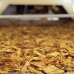 Setor de Produção de Tabaco retoma parte do mercado ocupado pelo contrabando e tem crescimento de 10% em 2020