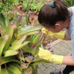 Trabalho para combater a dengue em Mato Leitão será intensificado