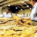 Comercialização do tabaco em Venâncio chega a 56%