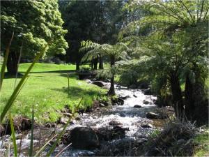Warburton - Creek