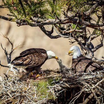 Eagles Nest – 12 April 2019