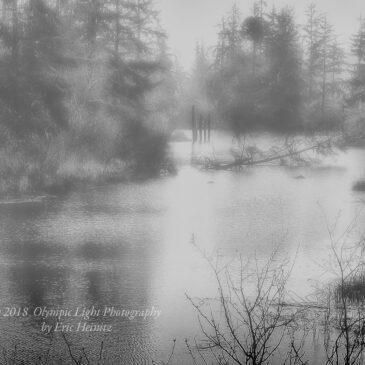 A Foggy Slough – April 8, 2018