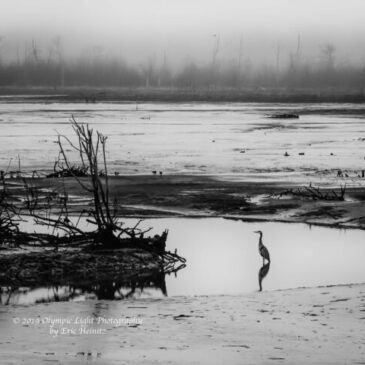 Nisqually Wetland – 05 January 2019