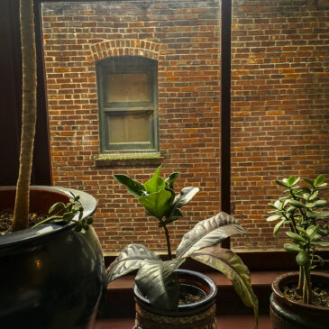 Post Alley Window – April 28, 2018