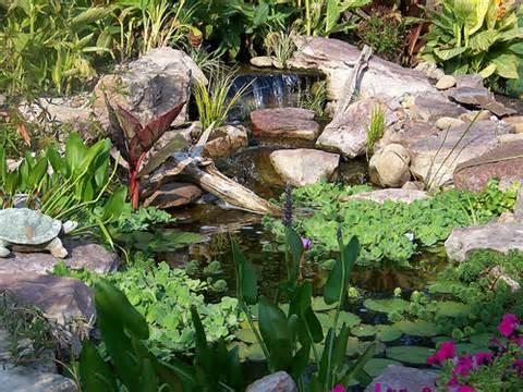 Greenhouse Garden Center has unique plants for any Carson City, Nevada garden.