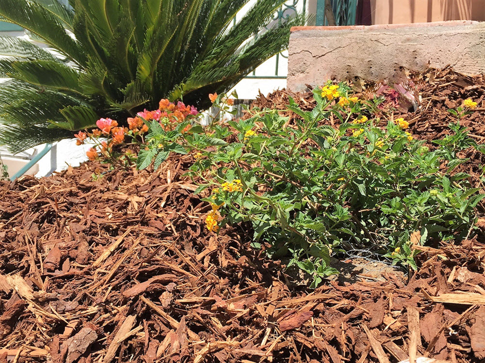 Ed's Landscaping mulch