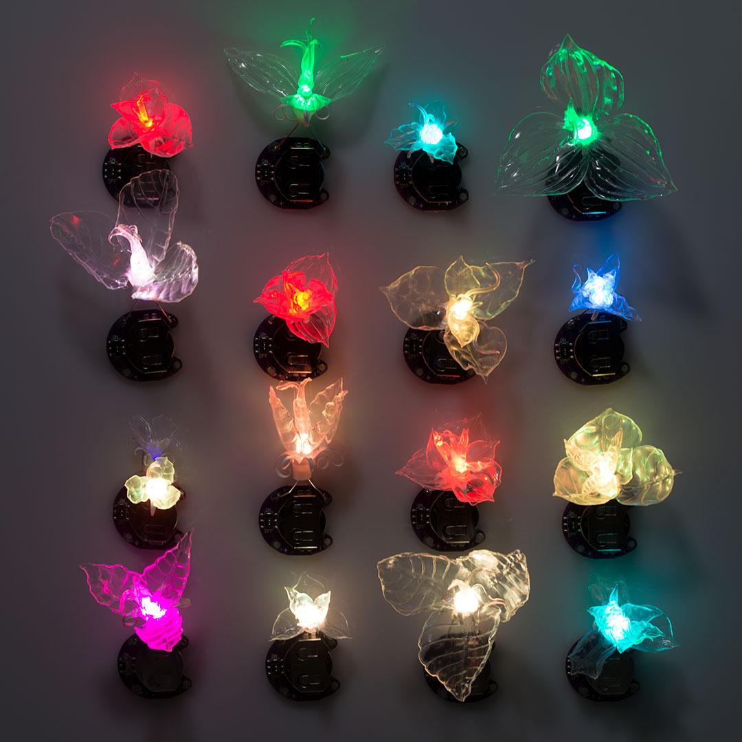 Trillium lumino